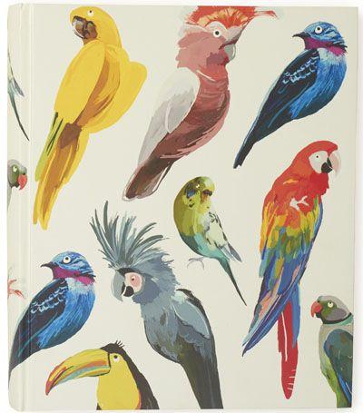 Drawn brds tropical bird On birds Best print Tropical