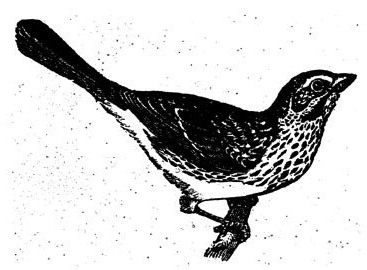 Drawn brds grunge Black sits vintage on bird