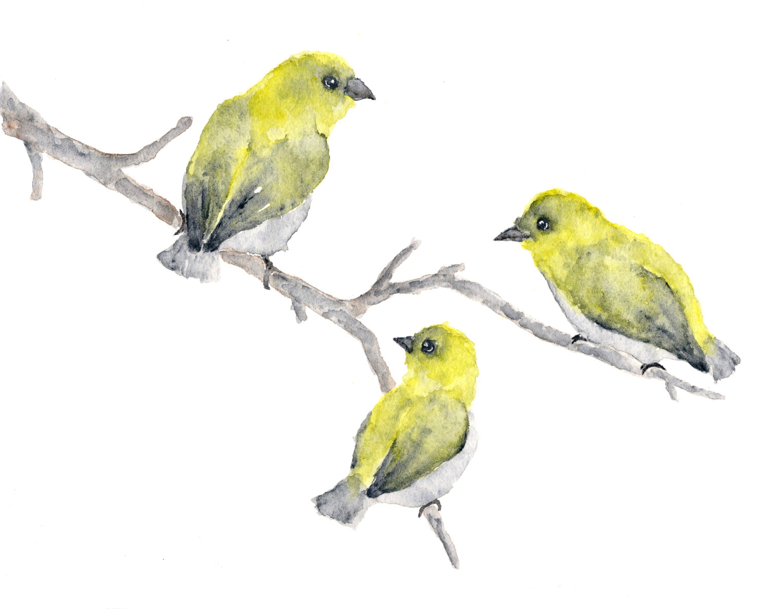 Drawn brds yellow finch Bird art nature painting abstract