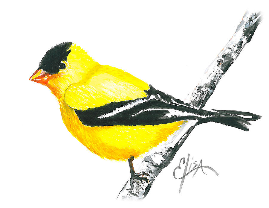 Drawn brds yellow finch Yellow drawings Drawings Yellow photo#10