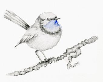 Drawn brds yellow finch Black Finch Art My Blue