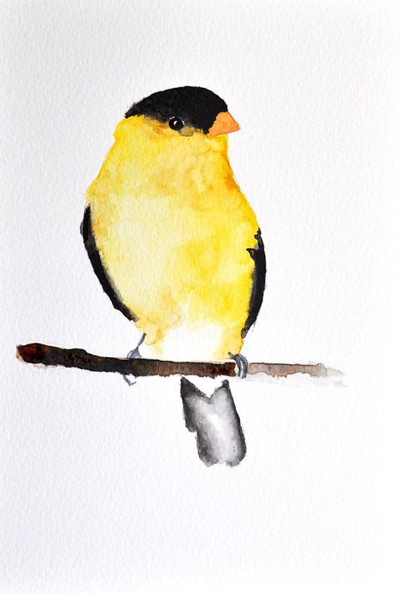 Drawn brds yellow finch Ideas Finch Bird Painting inch