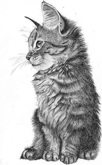 Drawn pice cat One of day come close