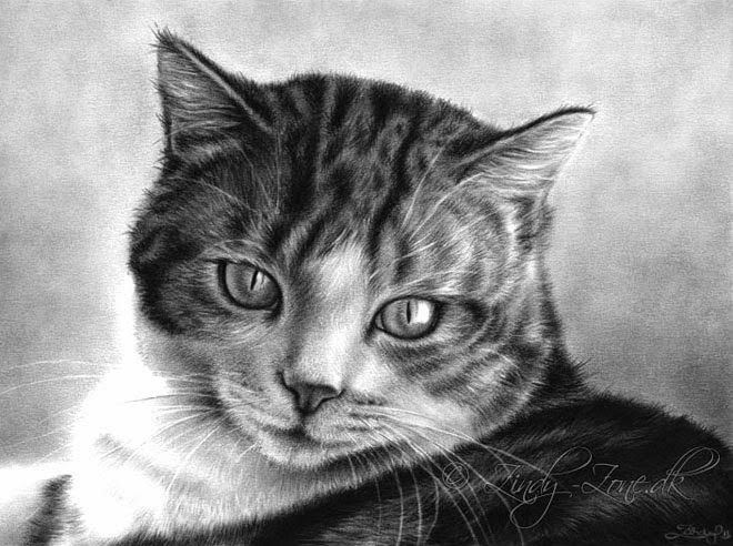 Drawn black cat domestic shorthair & on Drawings  20