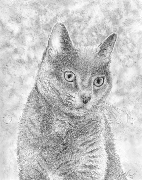 Drawn black cat domestic shorthair Custom Domestic Painting Portraits Pencil