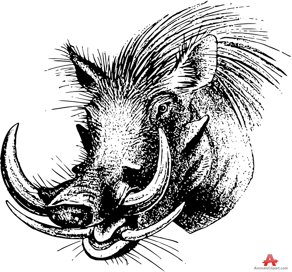 Drawn boar Free Clipart Drawing Boar Download