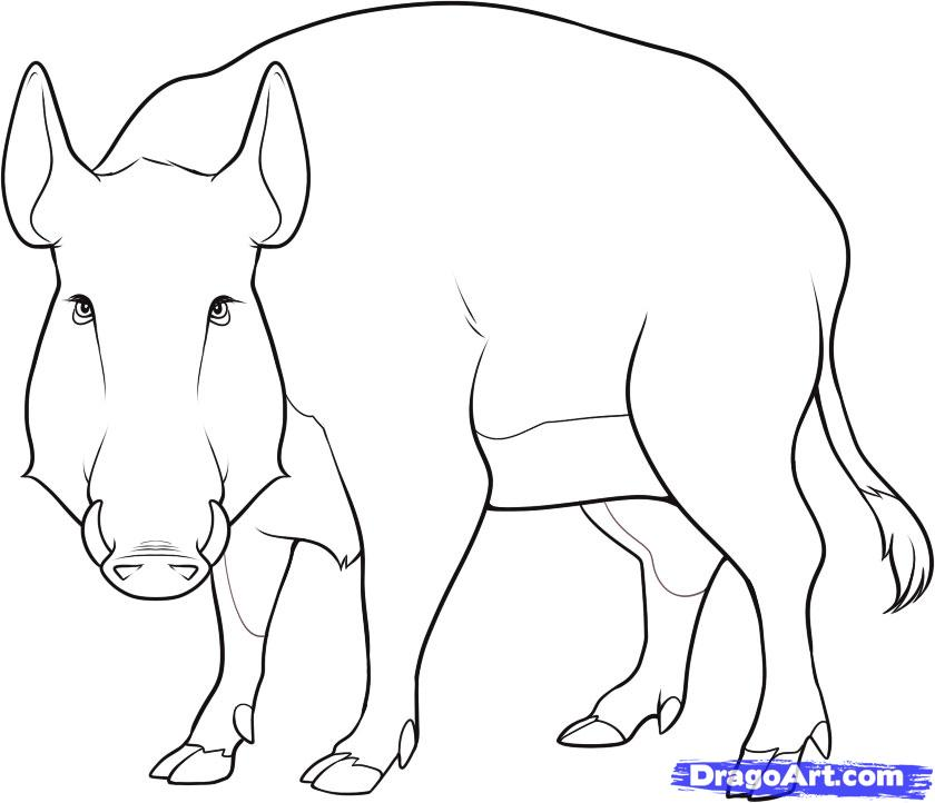 Drawn boar How a draw to a