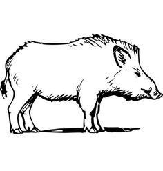 Drawn boar Marble A vector boar my