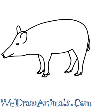 Drawn boar Draw to How a Boar