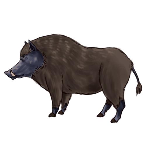 Drawn boar Boar: Intro Boar titled (with