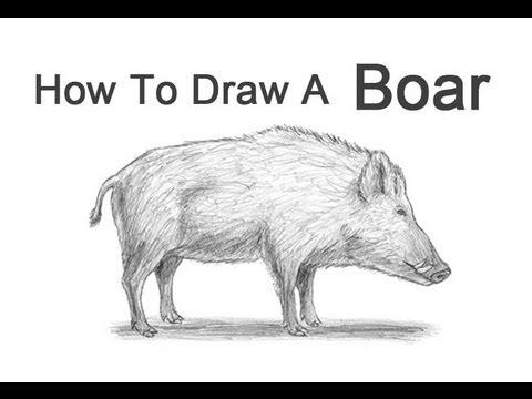 Drawn boar A a Draw to Boar