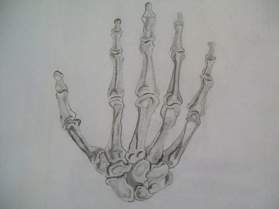 Drawn bones ScarecrowsDarkAngel by hand by on