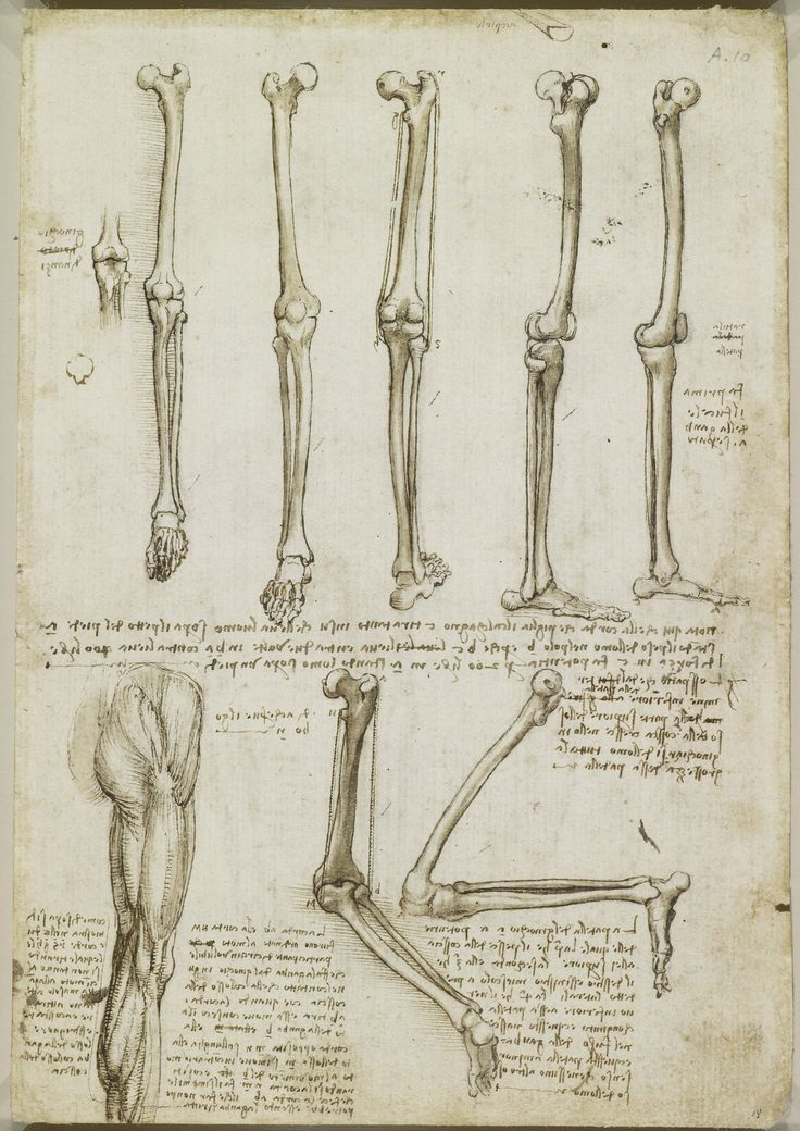 Drawn bones The Pinterest of and on
