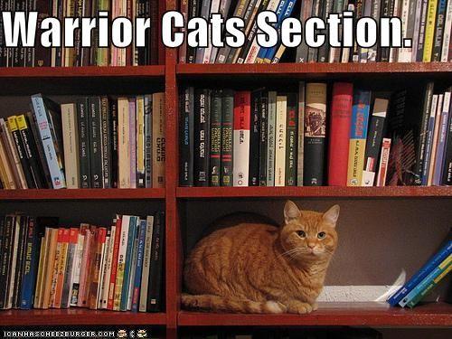 Drawn bookcase funny On cats Best ideas Firestar
