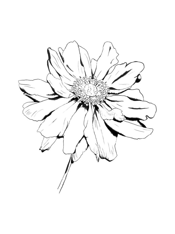 Drawn garden Flowers Drawings images Pinterest Picture: