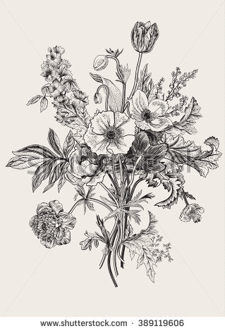Drawn vintage flower lily Tulips Poppy Victorian Vintage anemones
