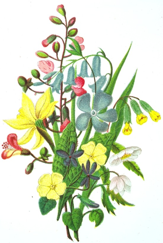 Drawn vintage flower bouquet Flowers Pink Yellow Pink Flowers