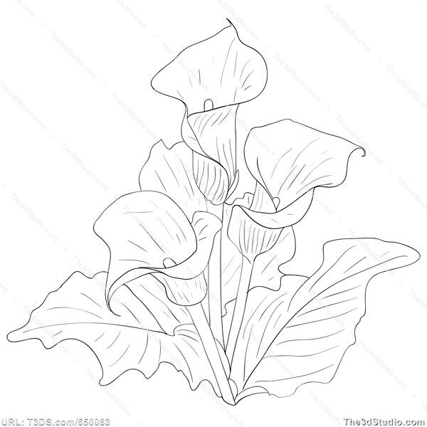 Drawn bouquet lily bouquet #4