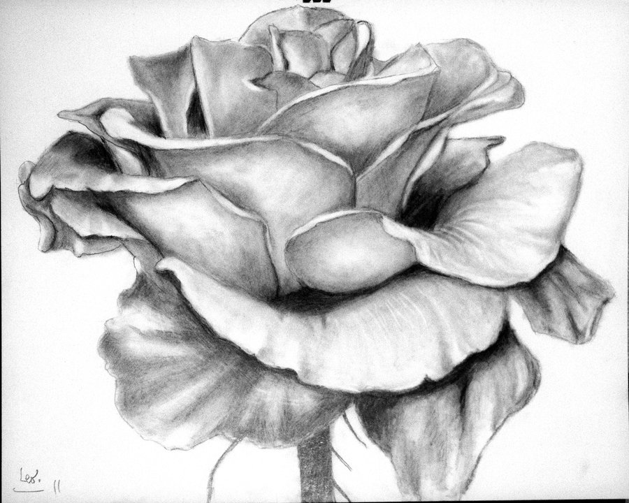 Drawn bouquet wedding bouquet Drawings: Roses Rose Pencil Drawing