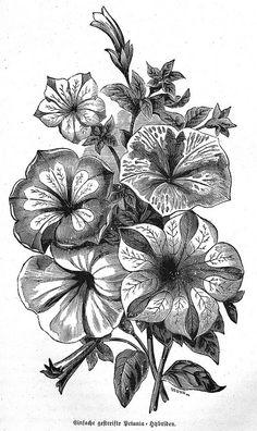 Drawn bouquet petunia #1