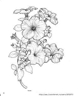 Drawn bouquet petunia #3