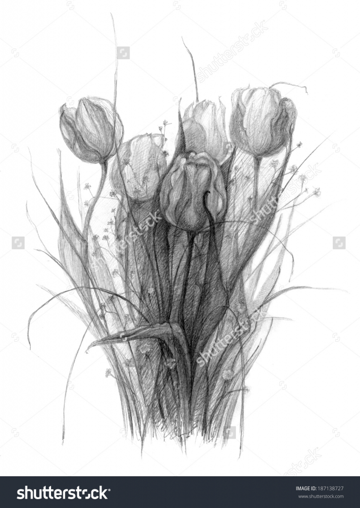 Drawn bouquet realistic Stock Sketch Of Pencil Flower