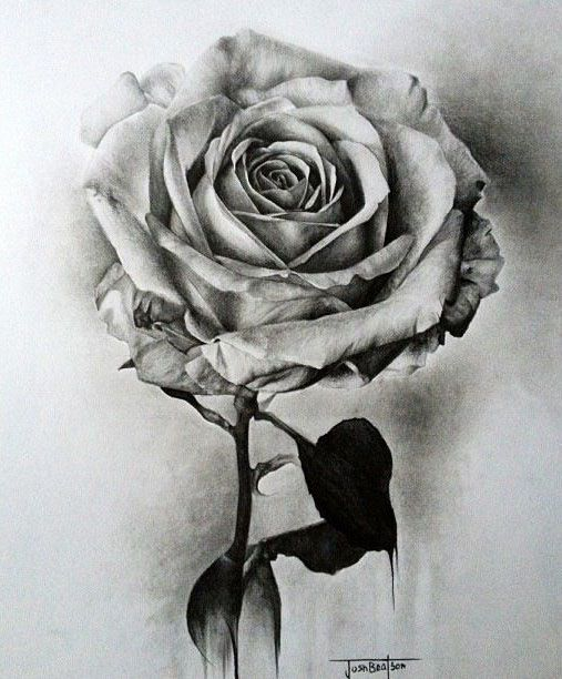 Drawn bouquet realistic 40 Flower  Flower and