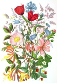 Drawn bouquet realistic Bouquet Art Drawing Images Drawing