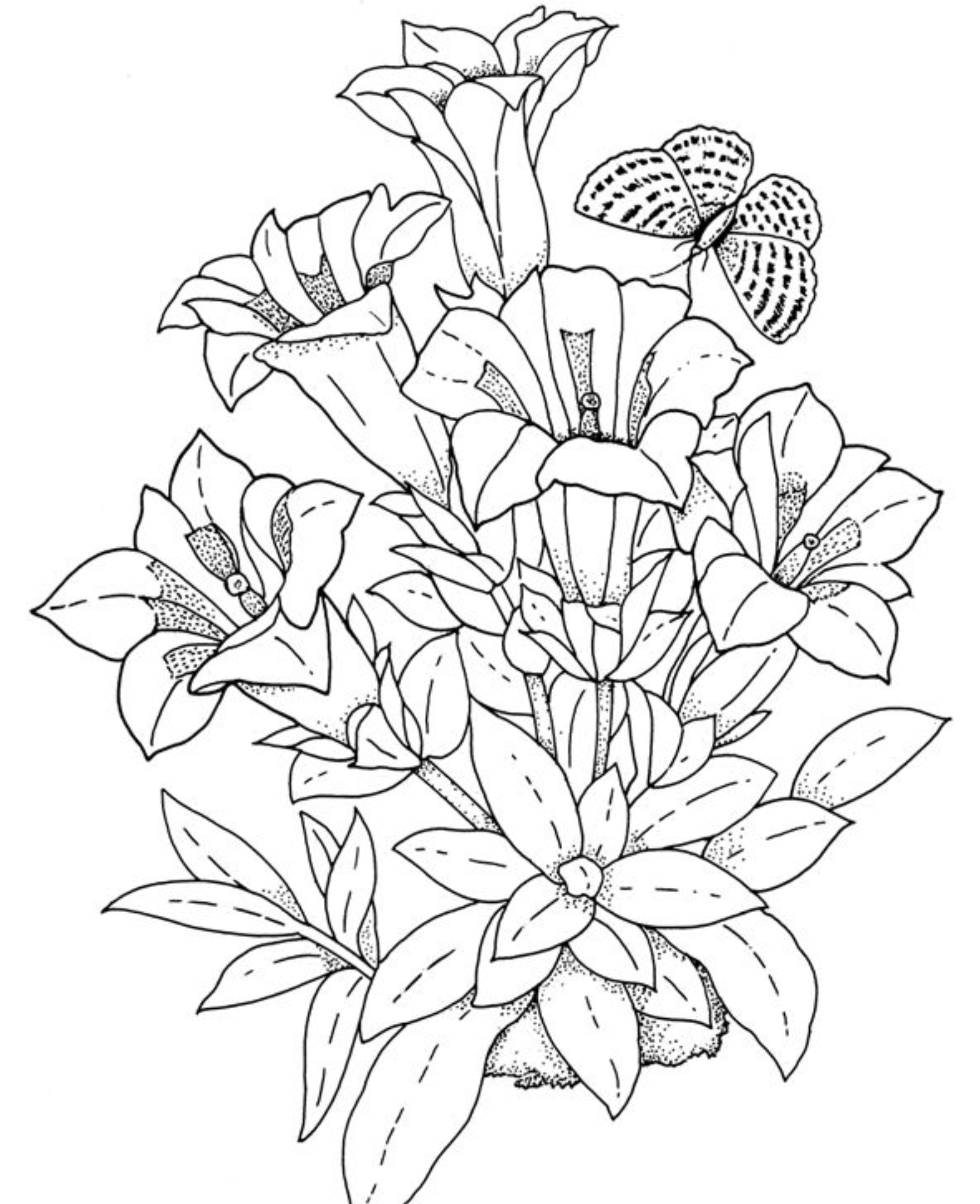 Drawn bouquet realistic Pages Print  flowers pages