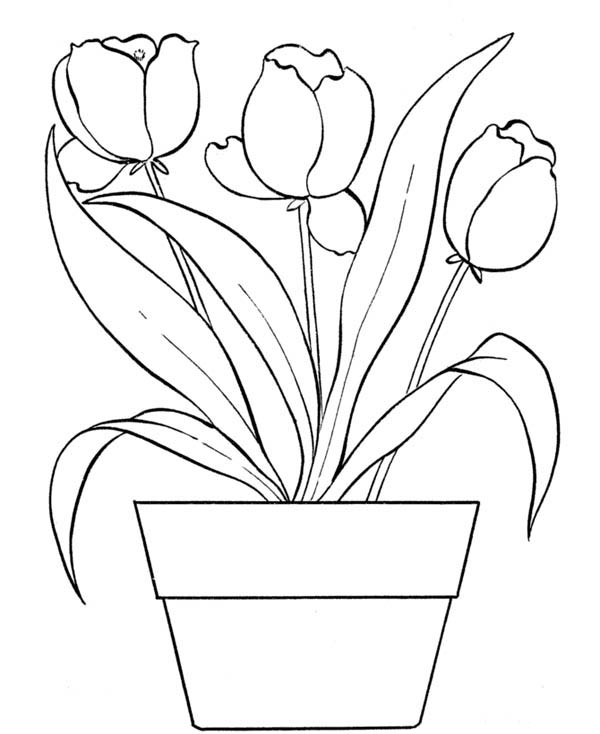 Drawn bouquet tulip bouquet Flower Page Bouquet Flower Tulips