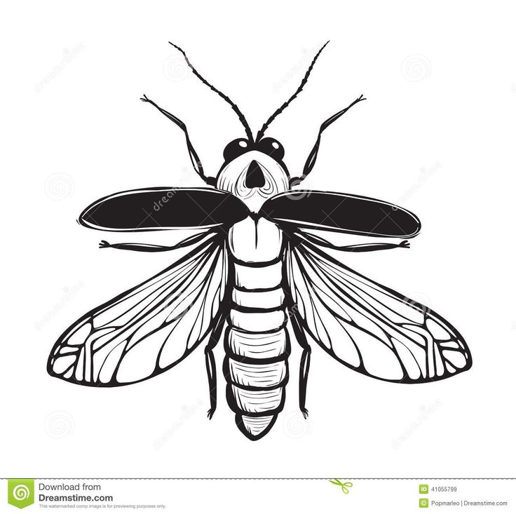 Drawn braid insect Google images 19 Search best