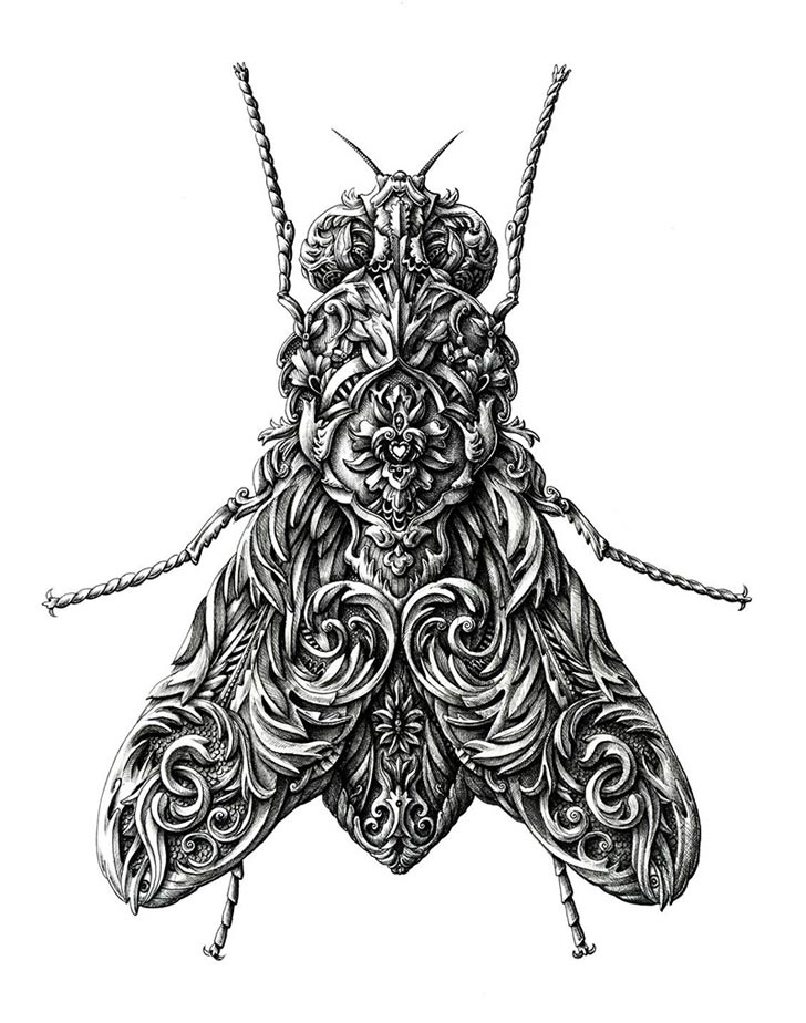 Drawn braid insect Of Line Drawings Insect fly