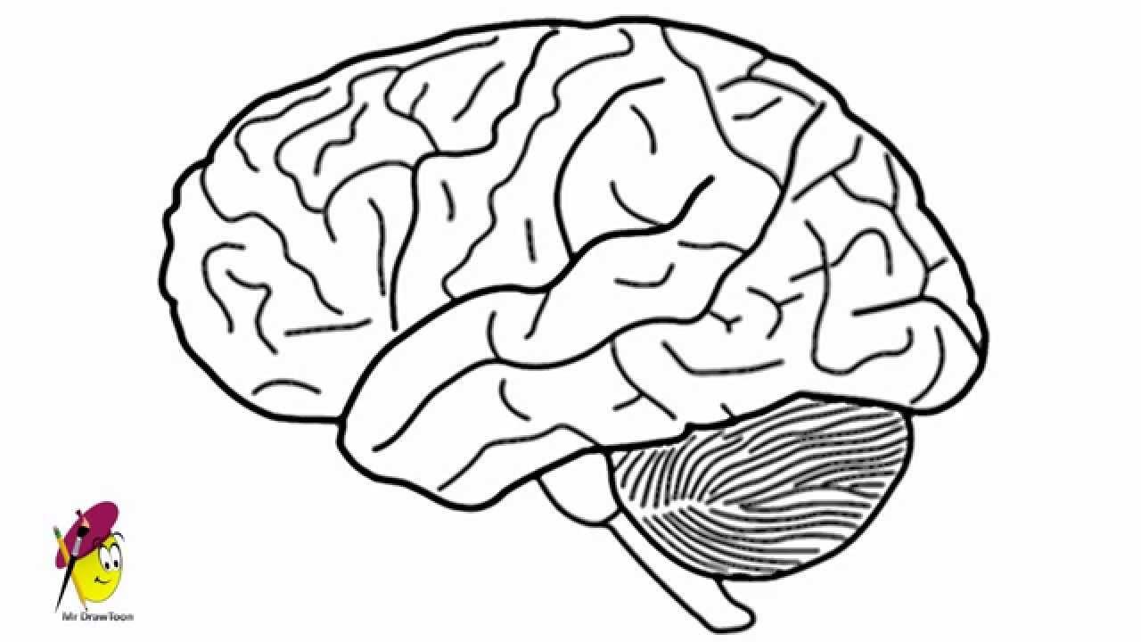 Drawn brain A How  draw YouTube