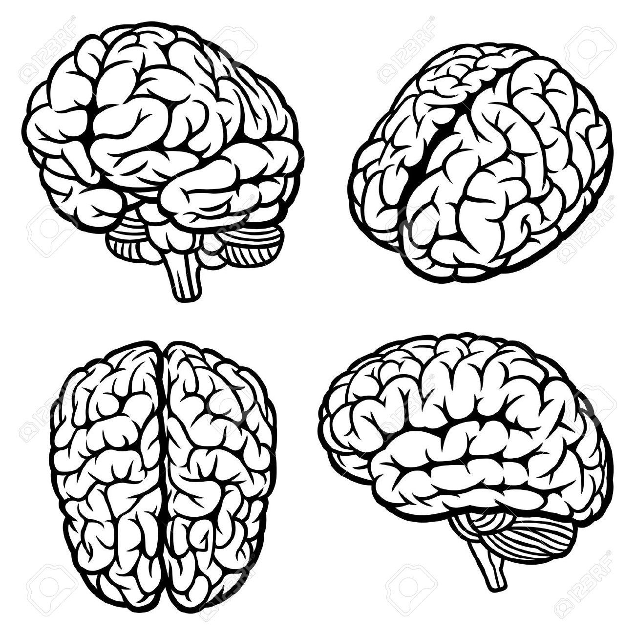 Drawn brain Drawing/coloring/fashion Brain of four anatomy