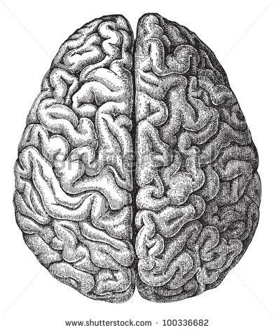 Drawn brains On Hein Brain illustration Best