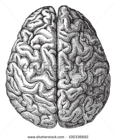 Drawn brain Illustration vintage Best Human Lexikon