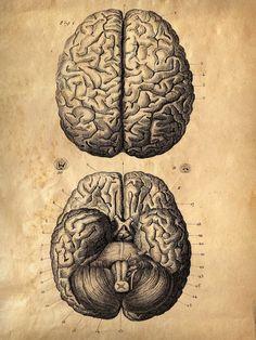 Drawn brain art #10