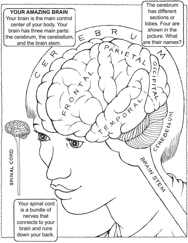 Drawn brain coloring page #9