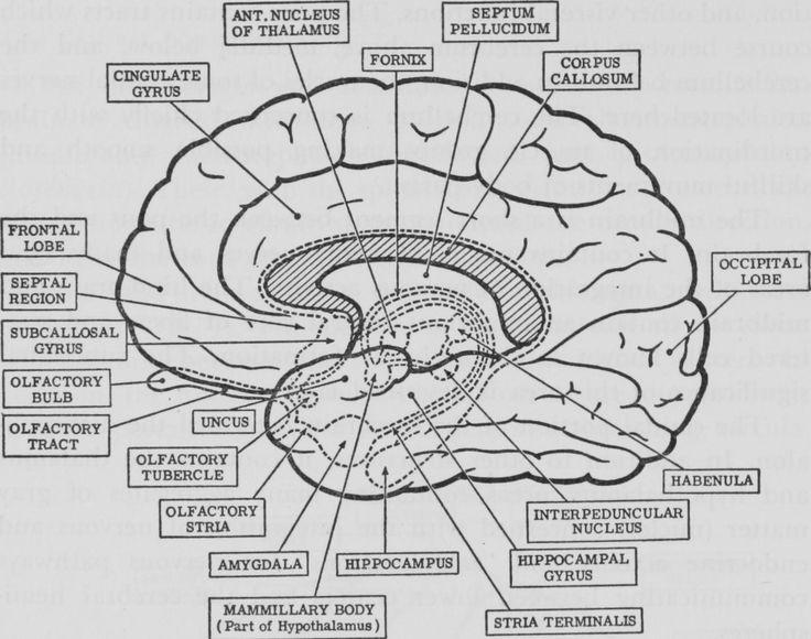 Drawn brain coloring page #13