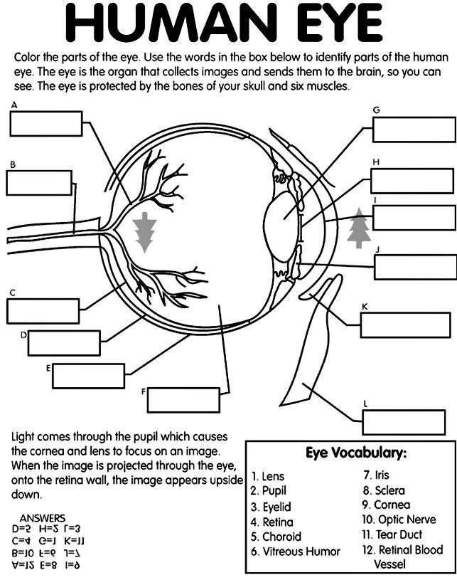 Drawn brain coloring page #6