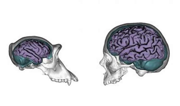 Drawn brain human body #10