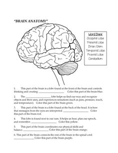 Drawn brain mad scientist Fill Diagram: outline an of