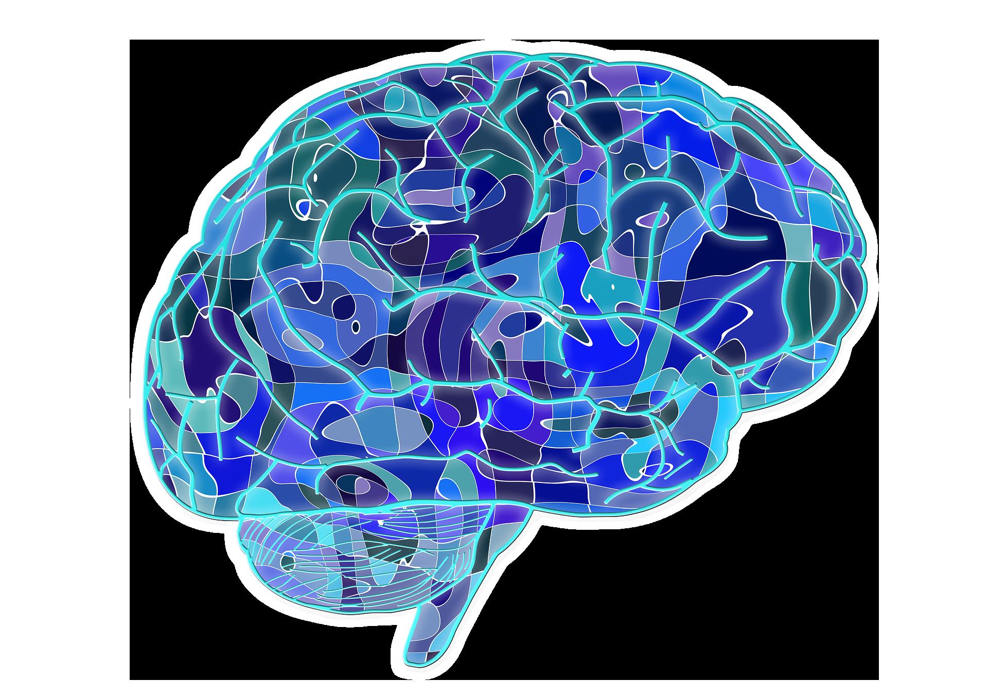 Drawn brain public domain #13