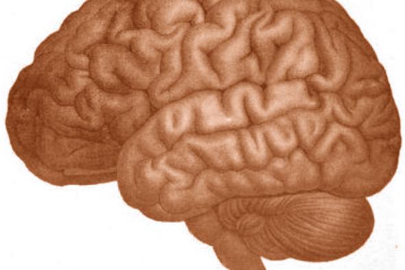 Drawn brain public domain #14