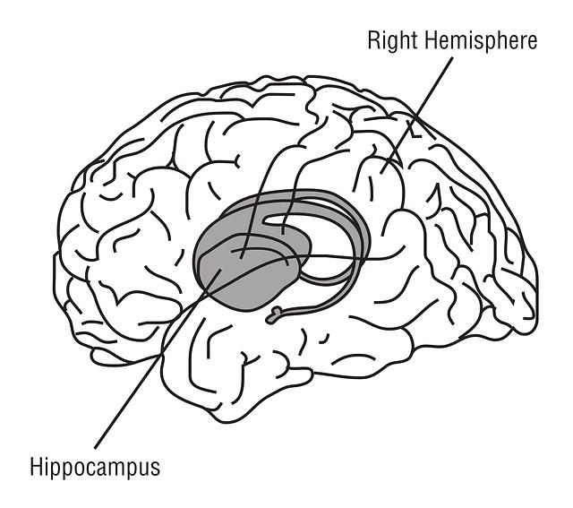Drawn brain public domain #12