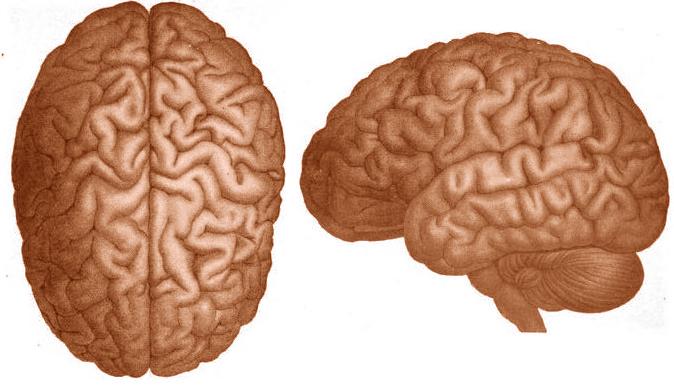 Drawn brain public domain #7