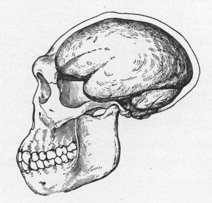 Drawn brain skull #10