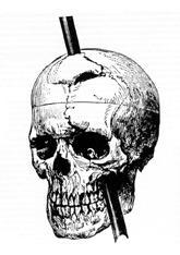 Drawn brain skull #8