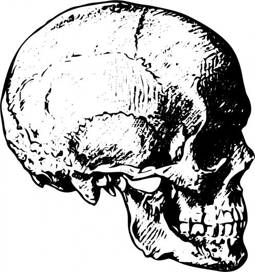 Drawn brain skull #7