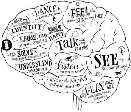 Drawn brains On NEUROANATOMY in and Draw